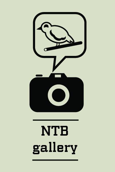NTB Gallery